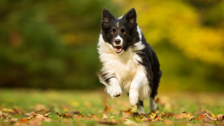 Understanding dogs and third party liability
